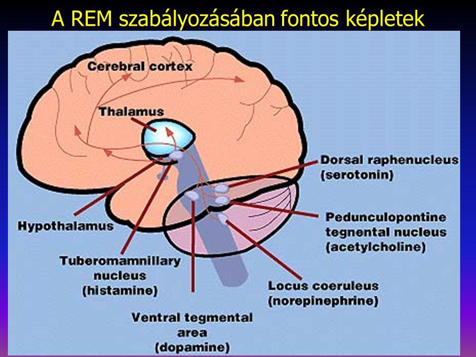 A REM szabályozásában fontos képletek