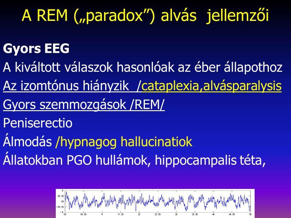 """A REM (""""paradox ) alvás jellemzői"""