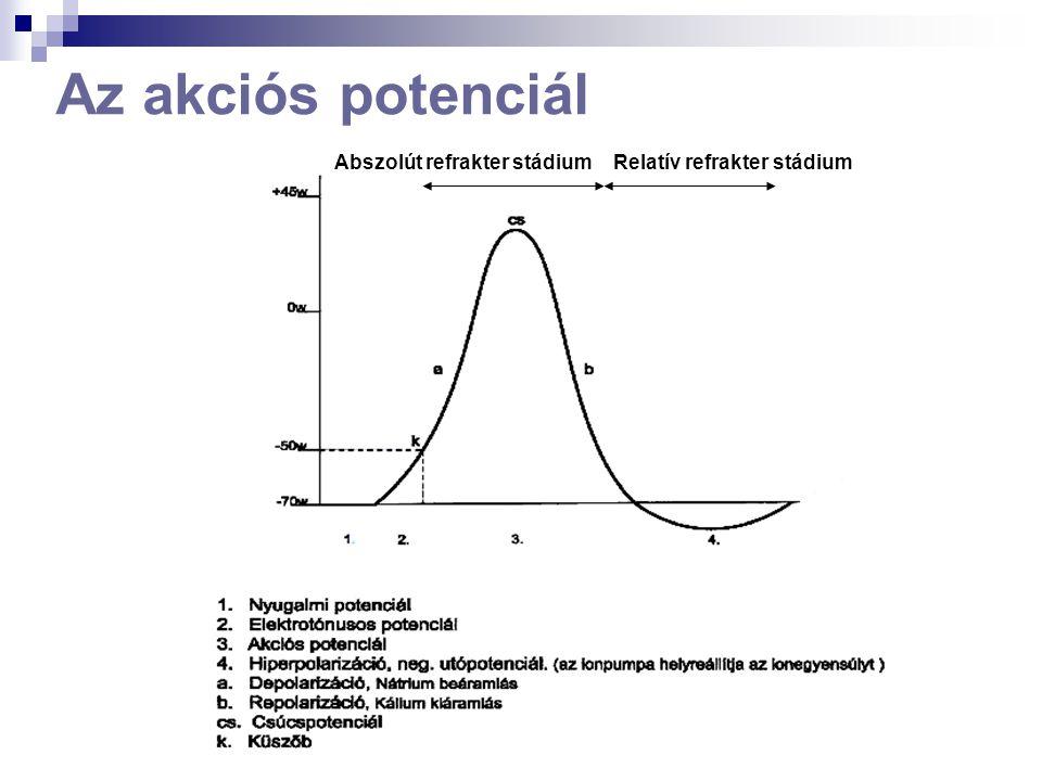 Az akciós potenciál Abszolút refrakter stádium