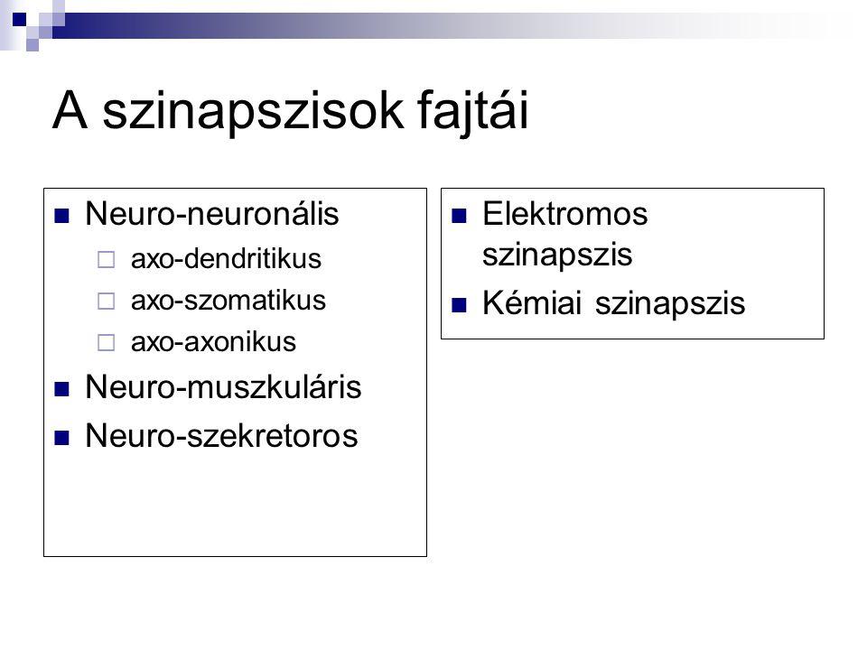 A szinapszisok fajtái Neuro-neuronális Neuro-muszkuláris