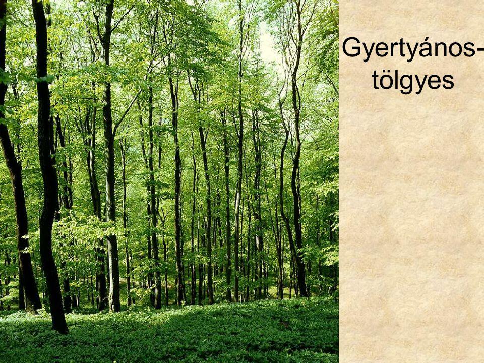 Gyertyános-tölgyes Gyertyános-tölgyes szálerdő (Pilis, 1994.) ELOH287