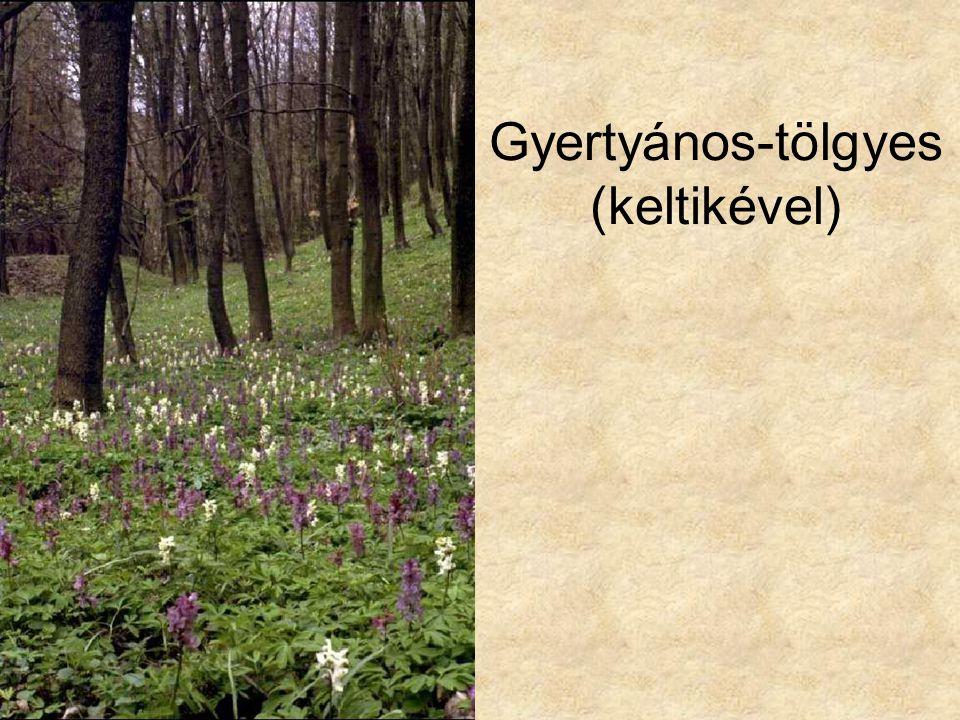 Gyertyános-tölgyes (keltikével)