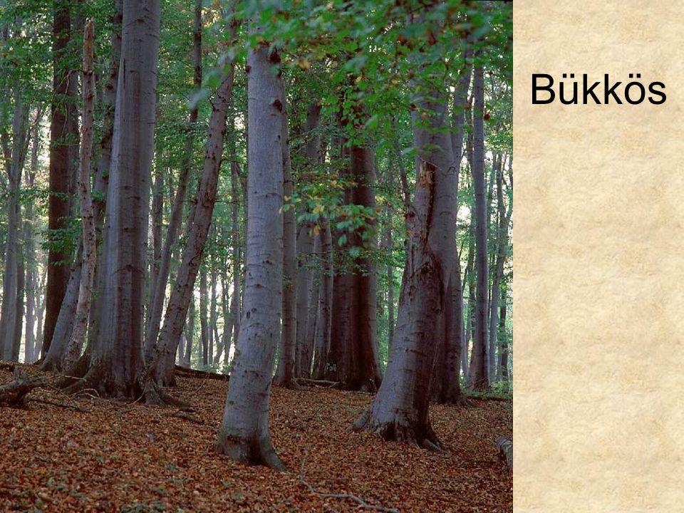 Bükkös Nudum bükkös (Budai-hegység Normafa, 1995.) ELOH129
