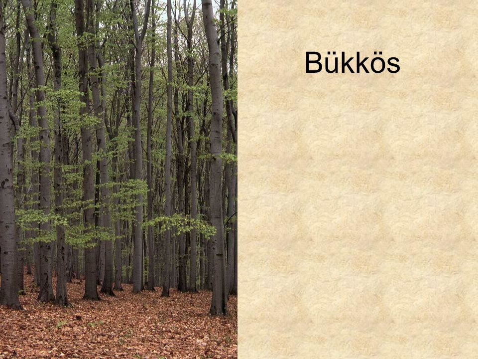 Bükkös Dunántúli bükkös II. (Farkasgyepű, 1994.) ELOH0957