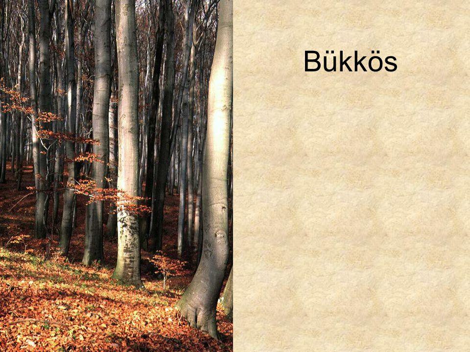 Bükkös Boroszlános bükkös őszi aszpektusa (Vértes Fáni-völgy, 1994.) ELOH0584