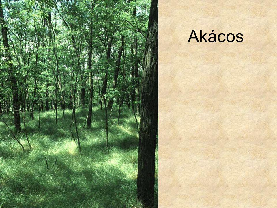 Akácos Akácos (Pestlőrinc, 1995.) ELOH0924
