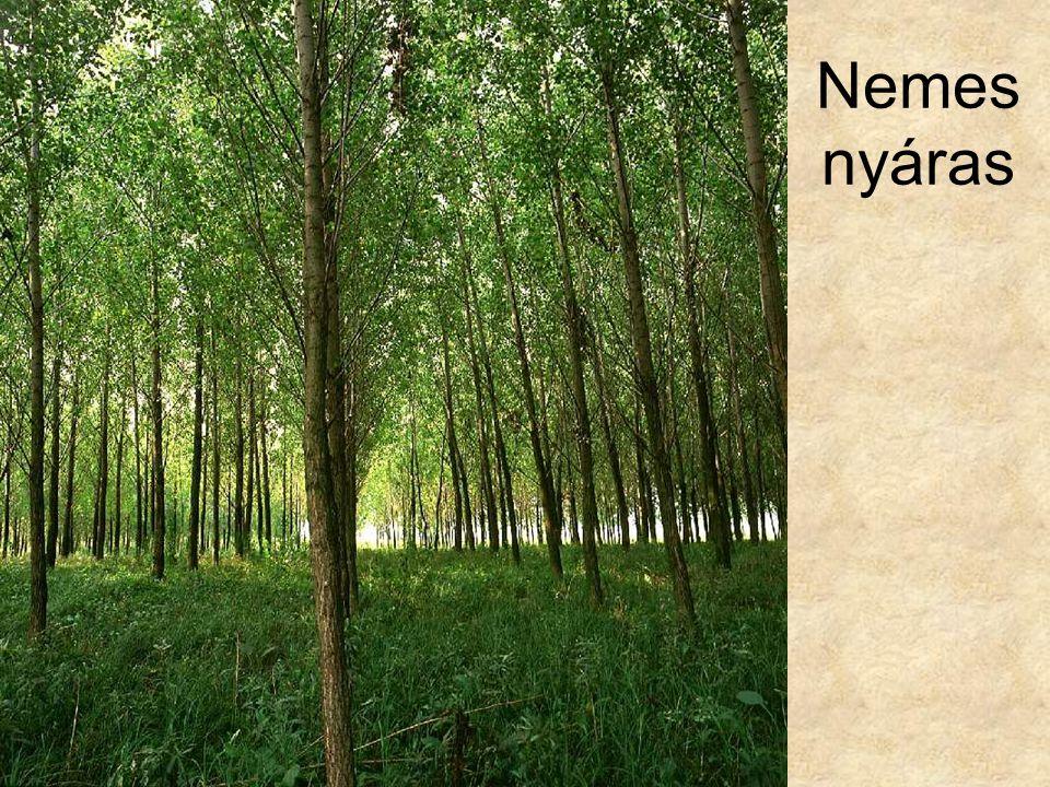 Nemes nyáras Nemes nyáras (Felsőzsolca, 1994.) ELOH122