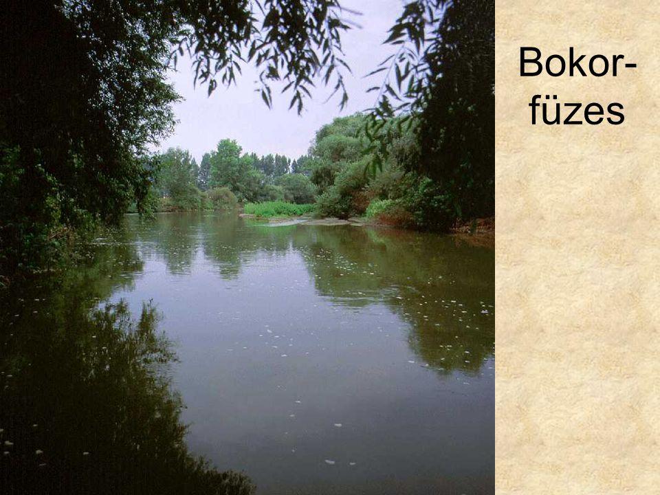 Bokor-füzes Kavicszátonyon megtelepedő bokorfüzes (Szentendrei-sziget, 1994.) ELOH203