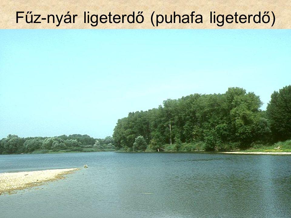 Fűz-nyár ligeterdő (puhafa ligeterdő)