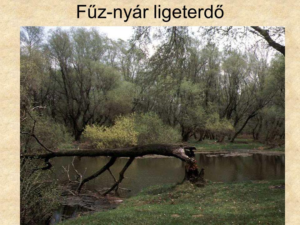 Fűz-nyár ligeterdő Puhafaliget (Hernádszurdok, 1996.) ELOH0381