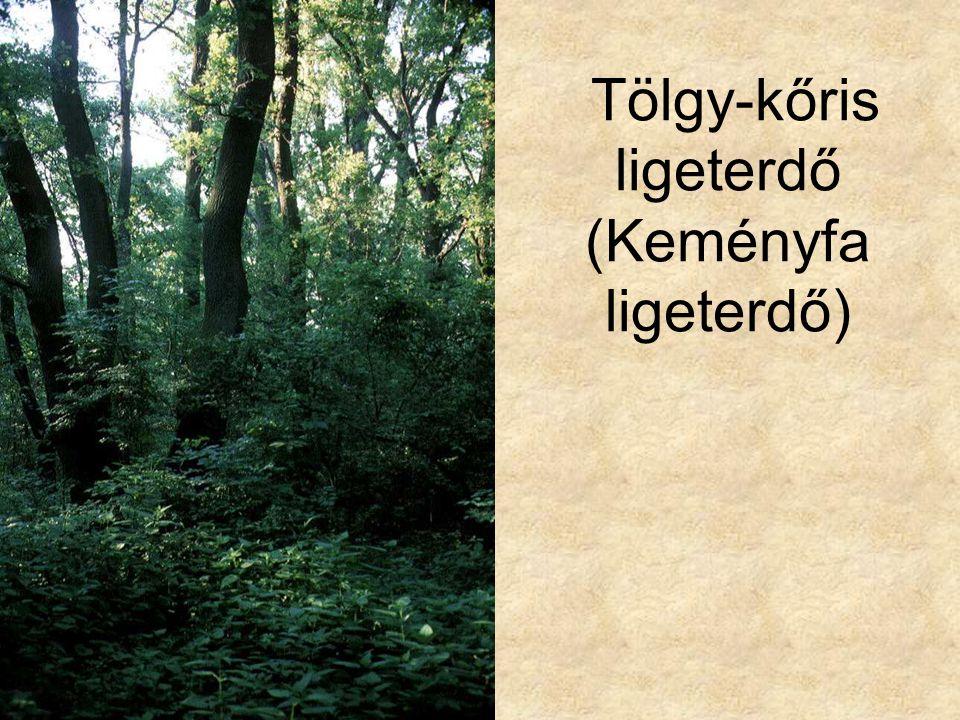 Tölgy-kőris ligeterdő (Keményfa ligeterdő)