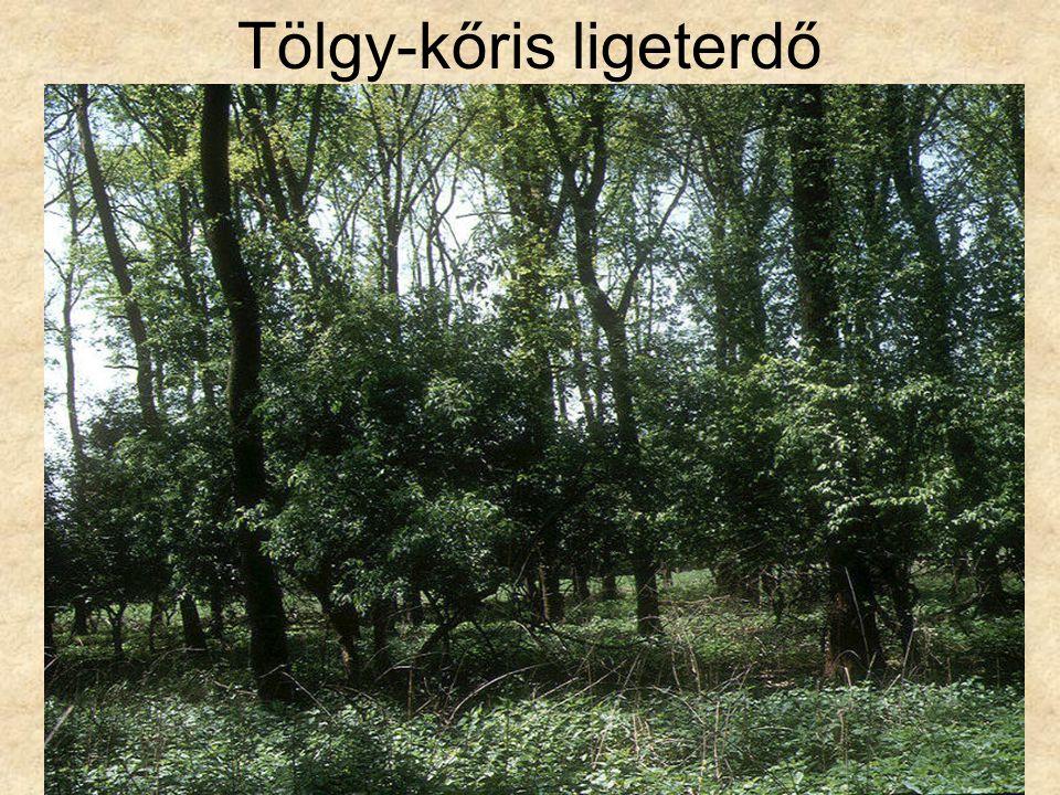 Tölgy-kőris ligeterdő