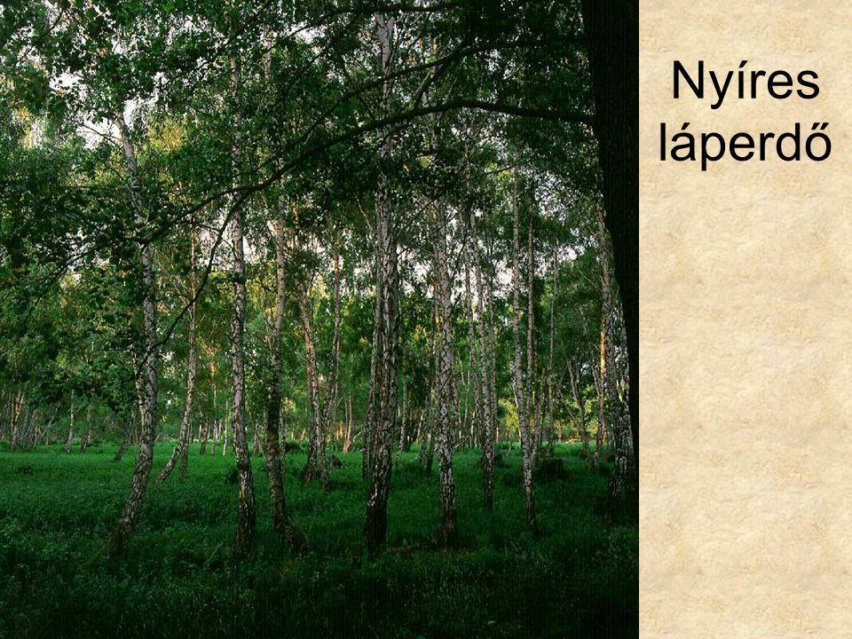 Nyíres láperdő Lápi nyíres (Hanság, 1996.) ELOH100