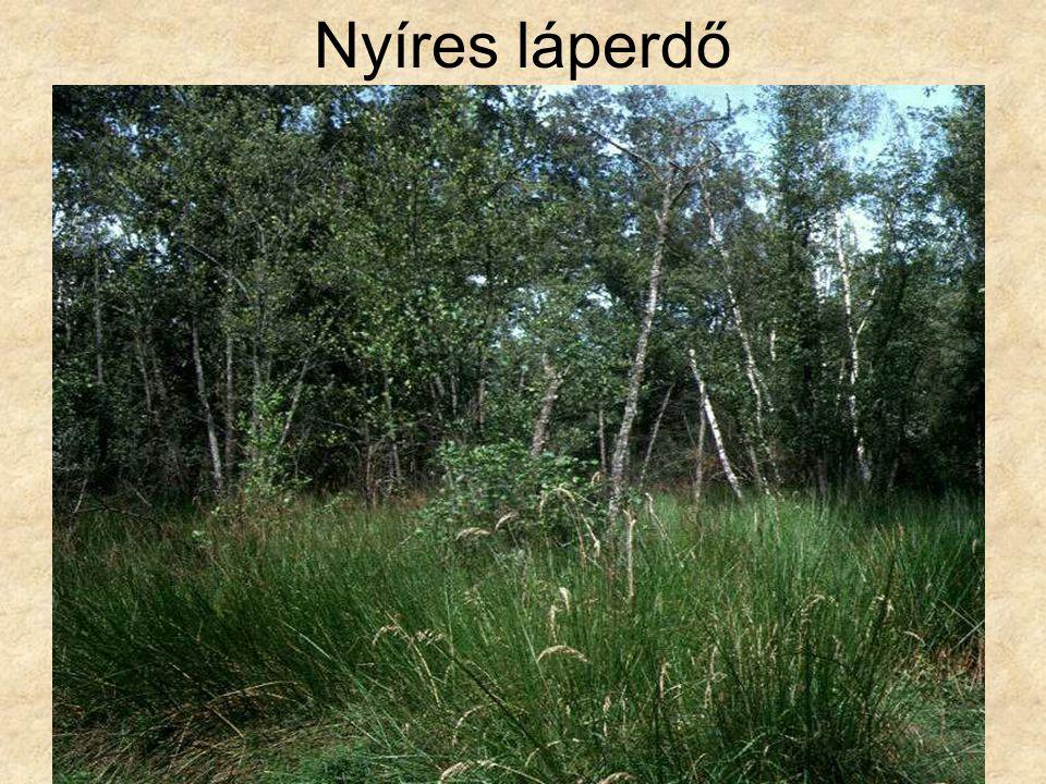 Nyíres láperdő Nyírláp (Darány, 1994.) ELOH1225