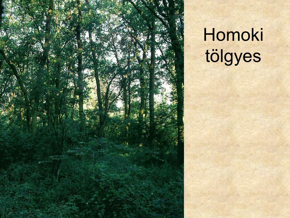 Homoki tölgyes Gyöngyvirágos tölgyes (Pusztaszer, 1996.) ELOH184