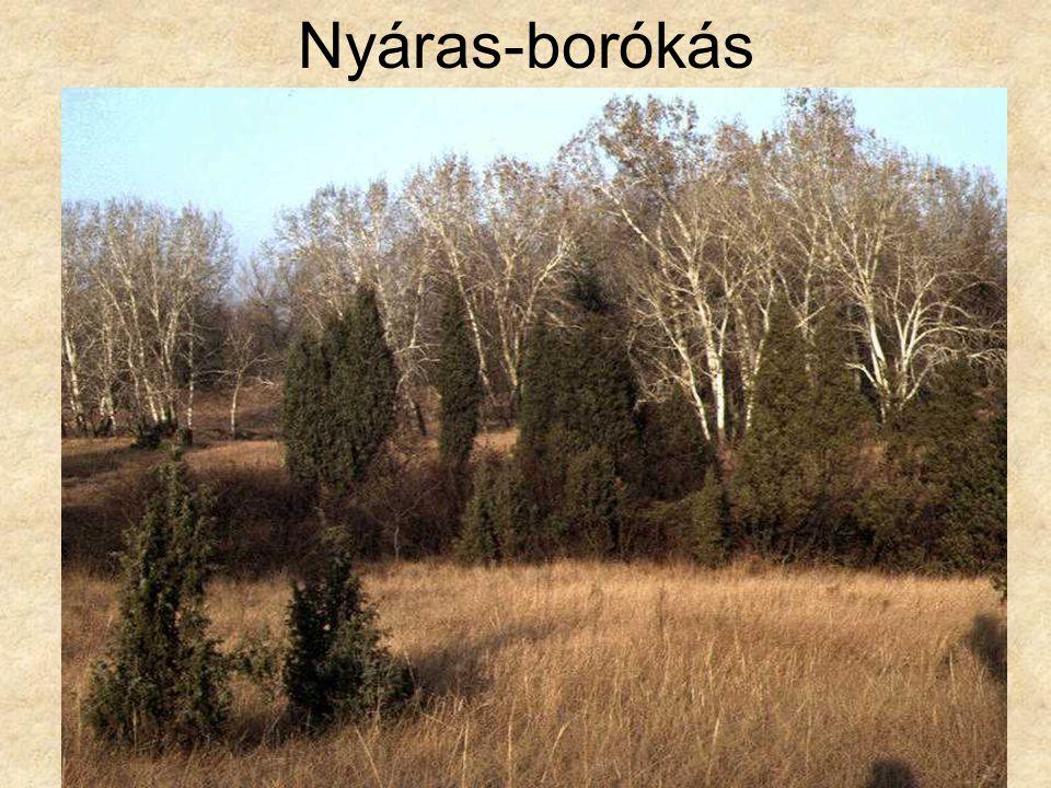 Nyáras-borókás Nyáras-borókás télen (Bócsa, 1996.) ELOH0685
