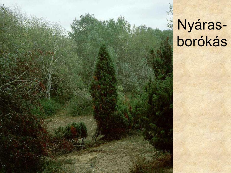 Nyáras-borókás Nyáras-borókás (Bugac, 1993.) ELOH199