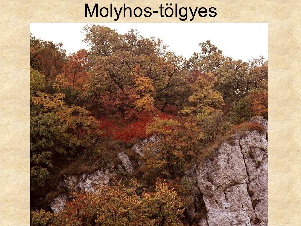 Molyhos-tölgyes Cserszömörcés karsztbokorerdő (Csákvár, 1977.) ELOH288