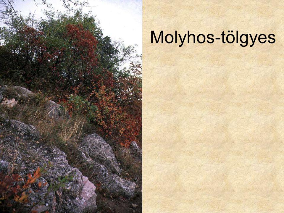 Molyhos-tölgyes Sajmeggyes karsztbokorerdő (Budapest Balogh Ádám-szikla, 1997.) ELOH0516
