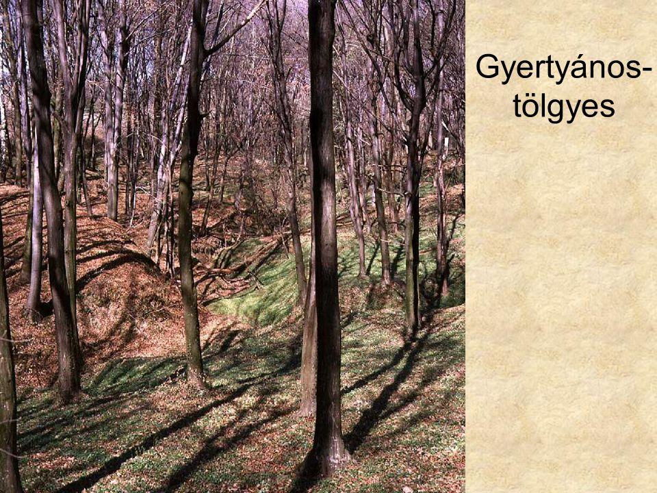 Gyertyános-tölgyes Zalai gyertyános-tölgyes tavaszi aszpektusa (Csöde, 1992.) ELOH114
