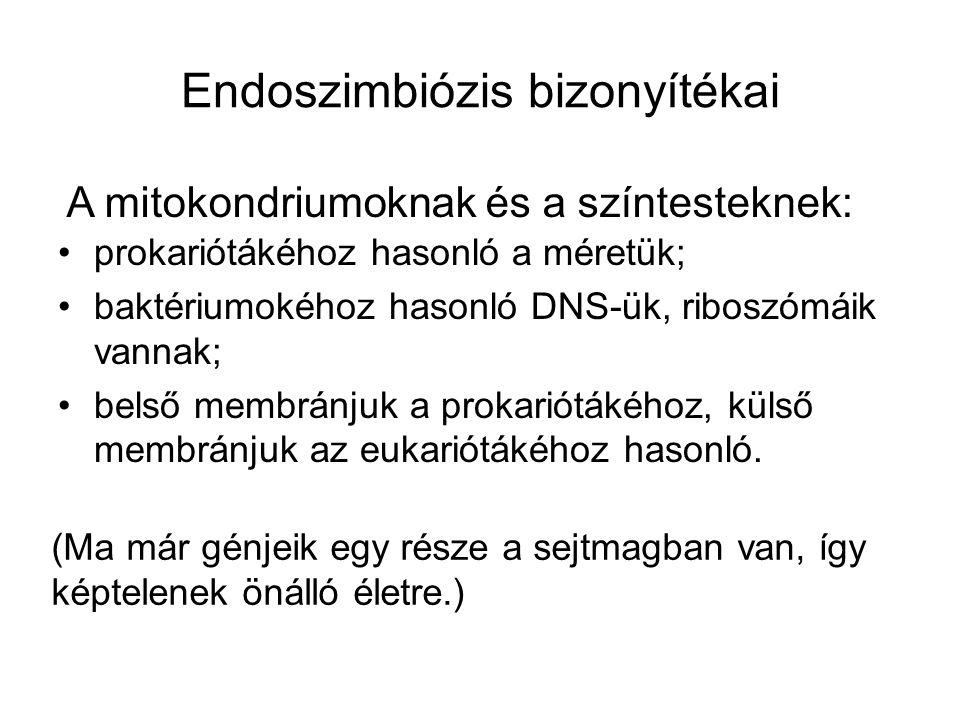 Endoszimbiózis bizonyítékai