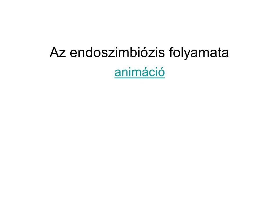 Az endoszimbiózis folyamata
