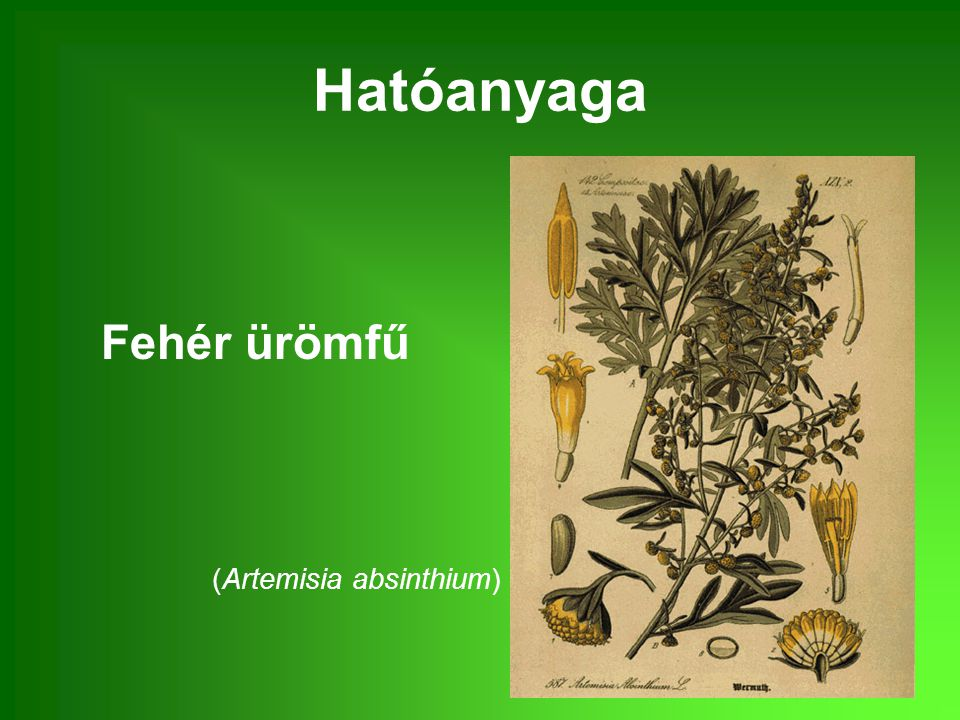 Hatóanyaga Fehér ürömfű (Artemisia absinthium)