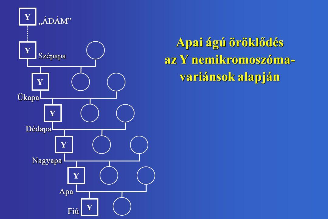 Apai ágú öröklődés az Y nemikromoszóma- variánsok alapján
