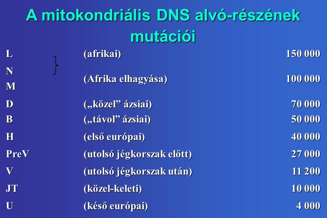 A mitokondriális DNS alvó-részének mutációi