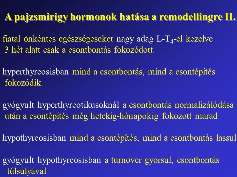 A pajzsmirigy hormonok hatása a remodellingre II.