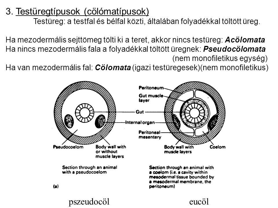 3. Testüregtípusok (cölómatípusok)