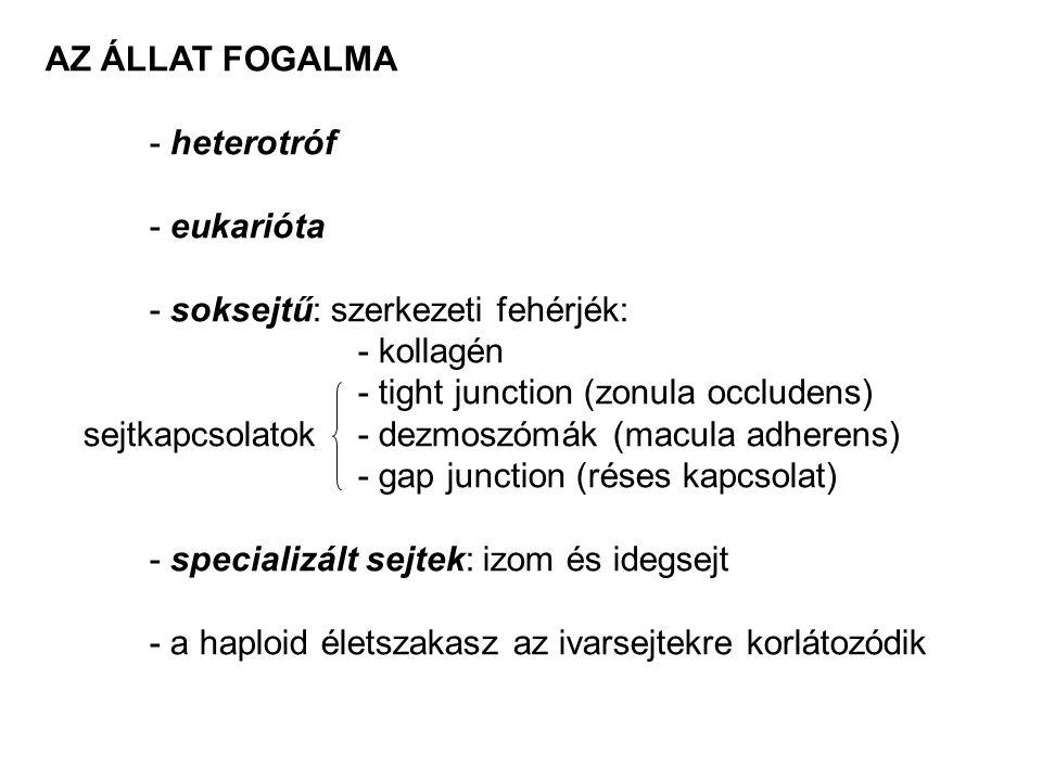 AZ ÁLLAT FOGALMA - heterotróf. - eukarióta. - soksejtű: szerkezeti fehérjék: - kollagén. - tight junction (zonula occludens)