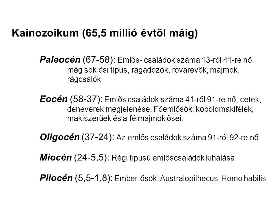 Kainozoikum (65,5 millió évtől máig)