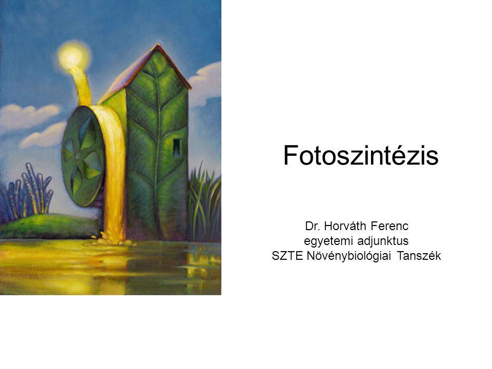 Fotoszintézis Dr. Horváth Ferenc egyetemi adjunktus