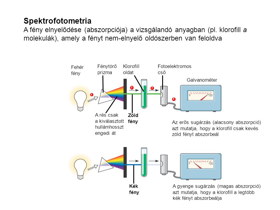 Spektrofotometria