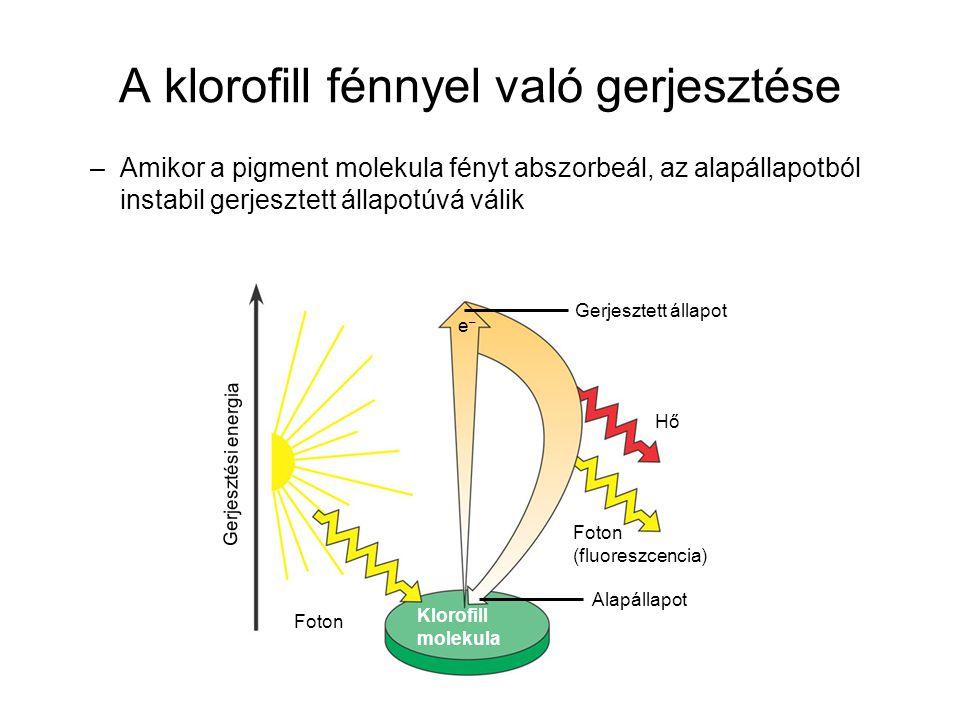 A klorofill fénnyel való gerjesztése