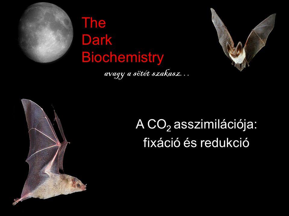 The Dark Biochemistry A CO2 asszimilációja: fixáció és redukció