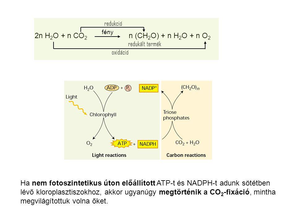 2n H2O + n CO2 n (CH2O) + n H2O + n O2