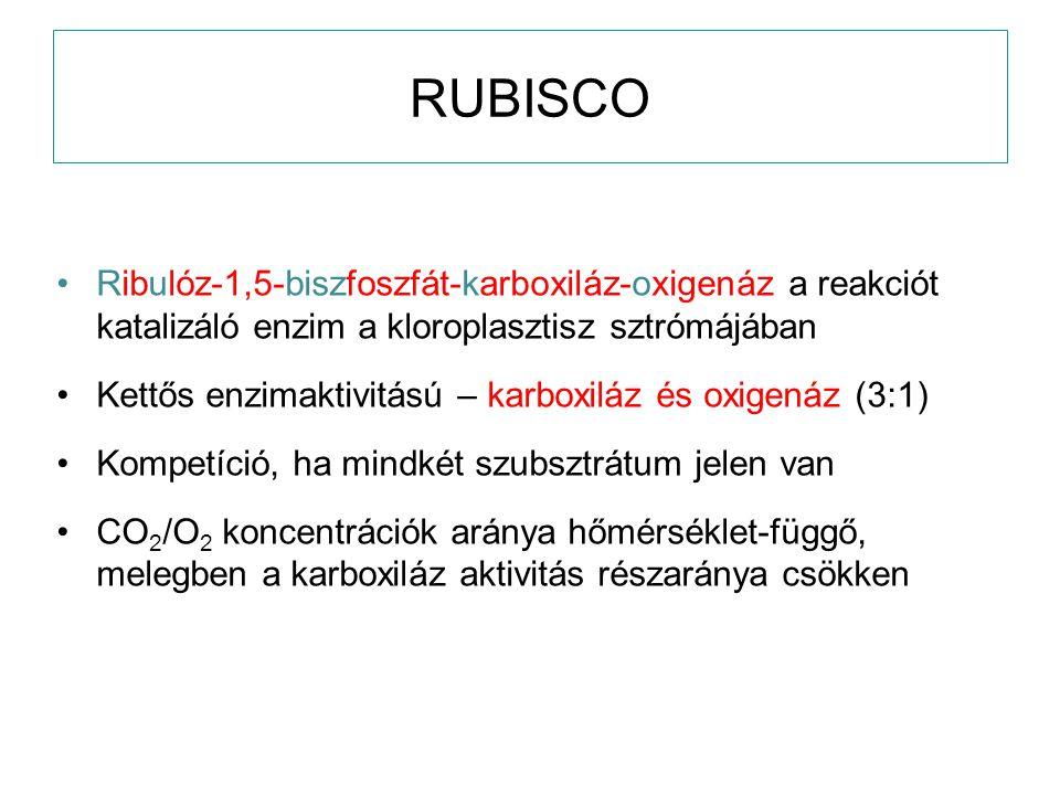 RUBISCO Ribulóz-1,5-biszfoszfát-karboxiláz-oxigenáz a reakciót katalizáló enzim a kloroplasztisz sztrómájában.