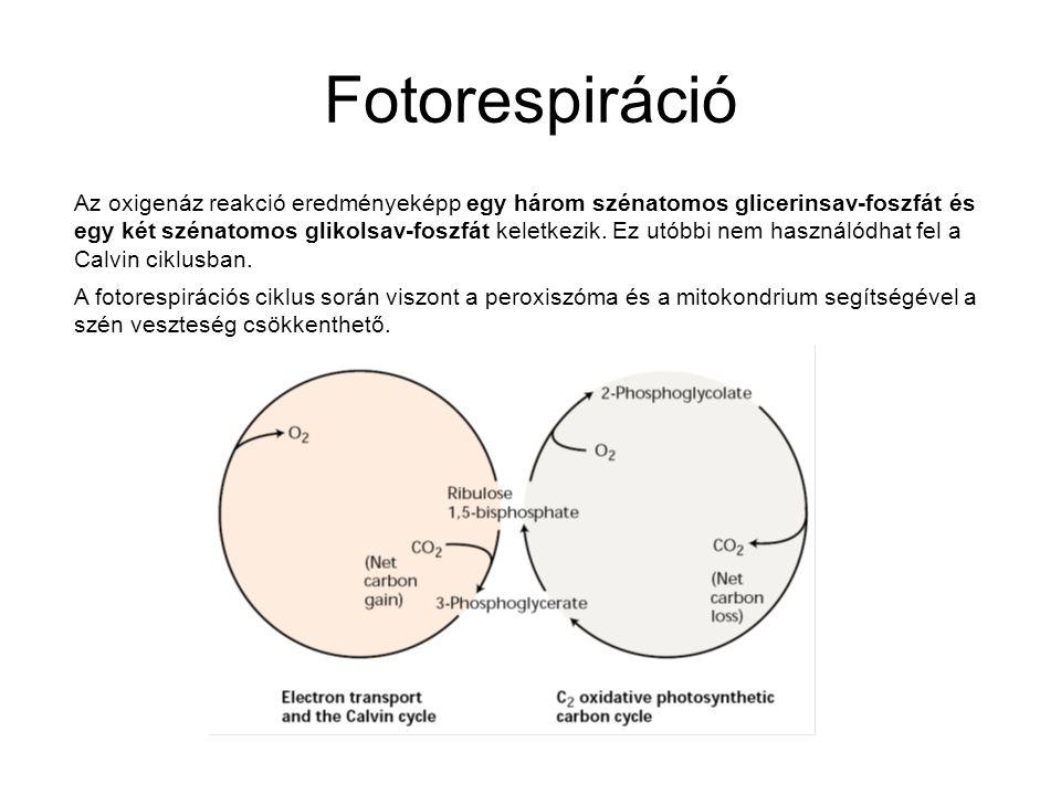 Fotorespiráció