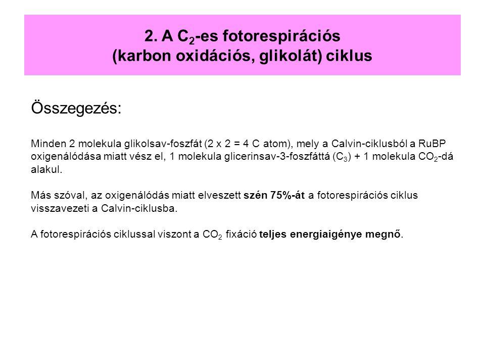 2. A C2-es fotorespirációs (karbon oxidációs, glikolát) ciklus