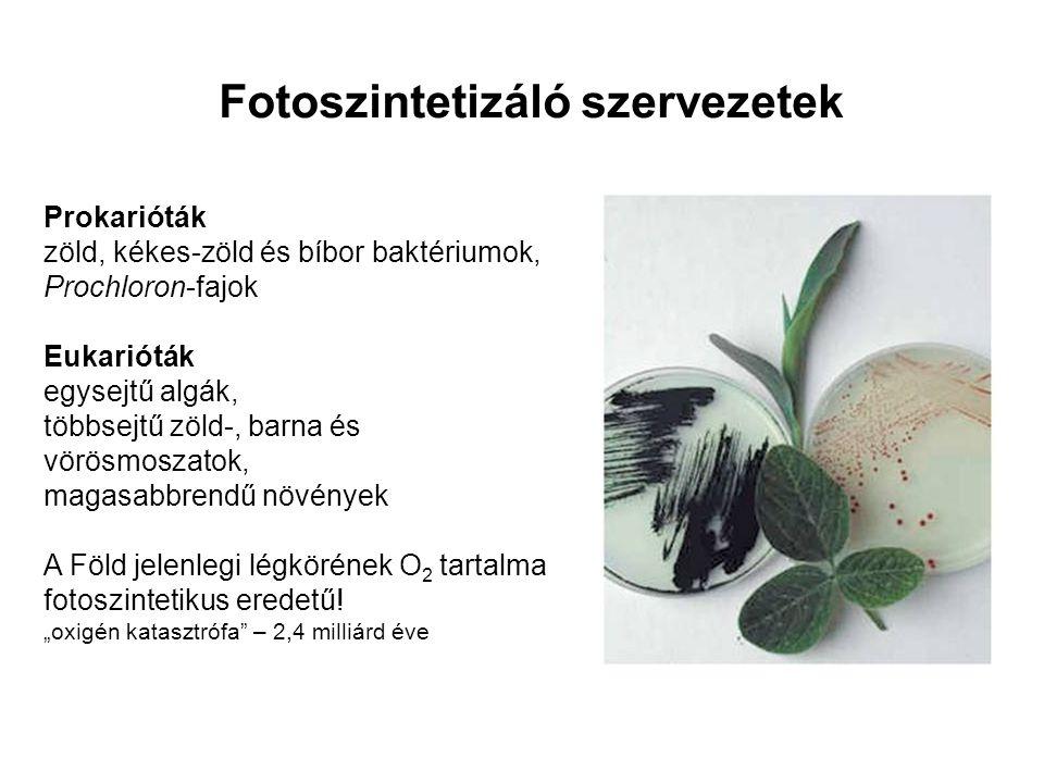 Fotoszintetizáló szervezetek