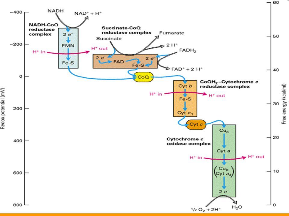 Energia transzfer ΔG = n·z·F·EMF