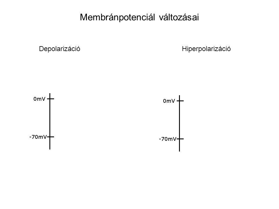 Membránpotenciál változásai