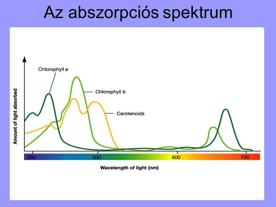 Az abszorpciós spektrum