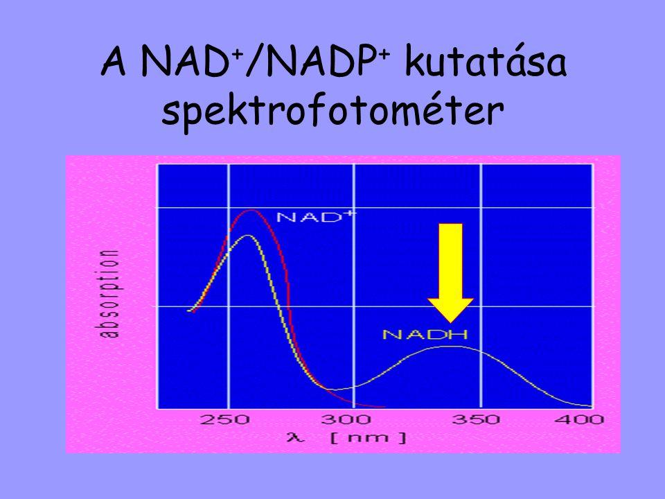 A NAD+/NADP+ kutatása spektrofotométer