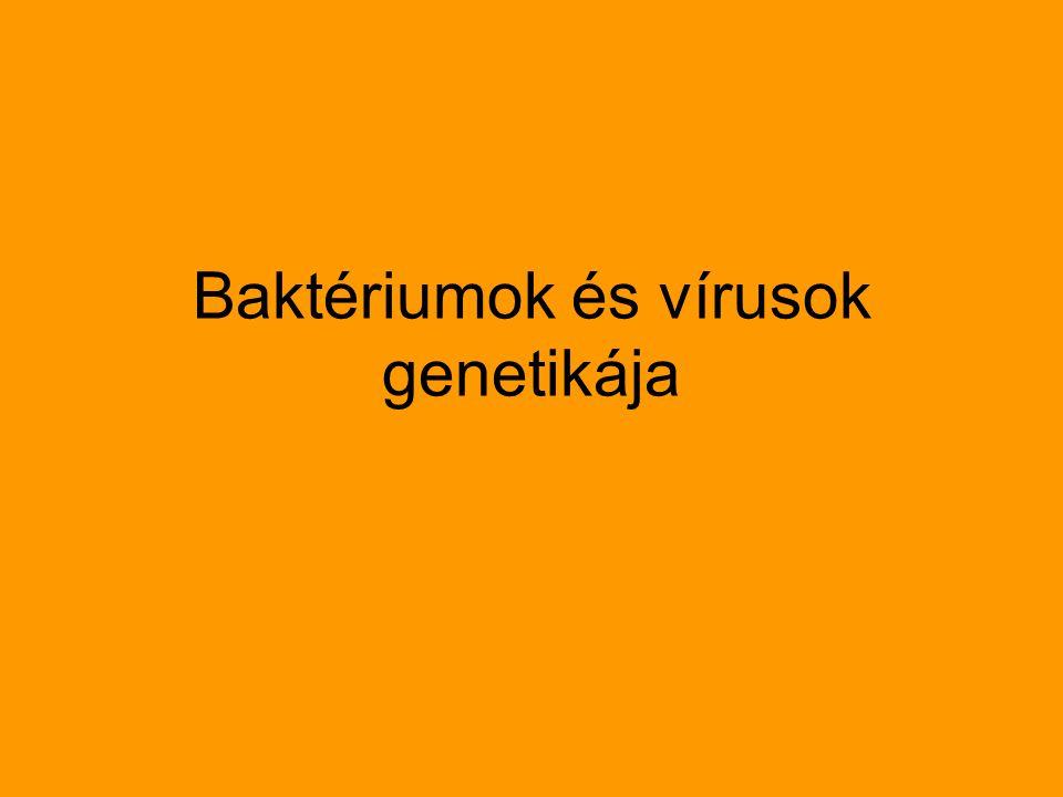 Baktériumok és vírusok genetikája
