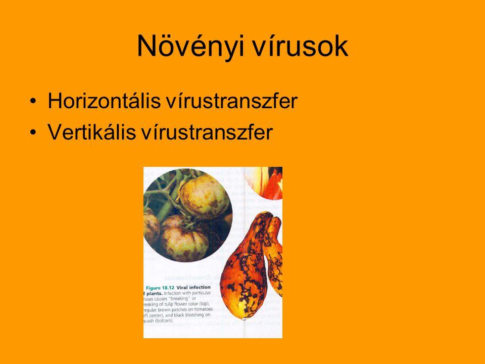 Növényi vírusok Horizontális vírustranszfer Vertikális vírustranszfer