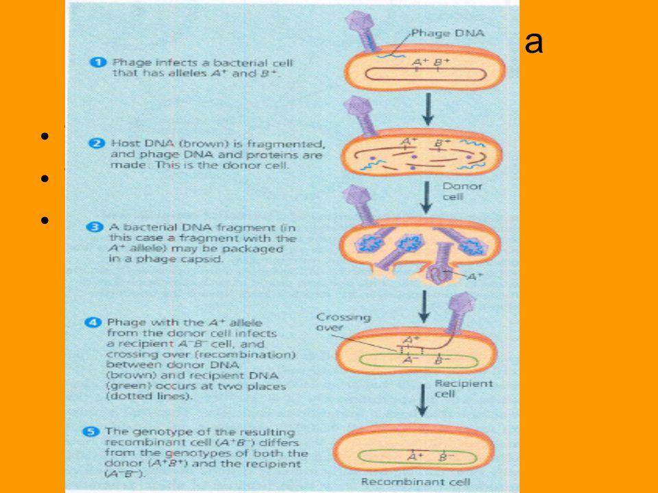 Genetikai anyag bevitele a baktériumokba