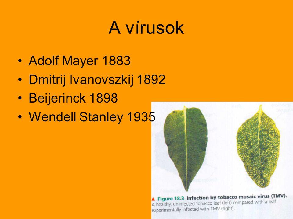 A vírusok Adolf Mayer 1883 Dmitrij Ivanovszkij 1892 Beijerinck 1898